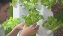 無土栽培新突破 電漿技術轉氮肥滋養植物