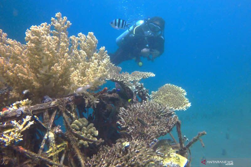 Program Padat Karya restorasi terumbu karang resmi diluncurkan