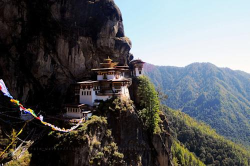 Flickr photo of the day: The tiger's nest