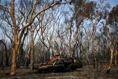 Hujan turun di lahan kebakaran hutan Australia