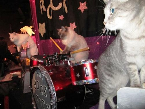 Meow Remix! Meet The Rock-Cats, The World's Only All-Feline Band