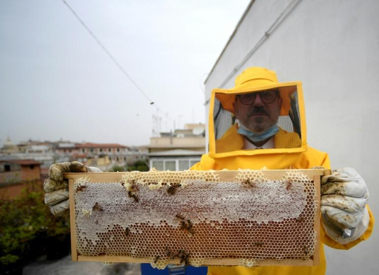 A beekeeper from the forestry unit of the carabinieri, or military police force, shows alveolus and bees on the rooftop of the command's headquarters in Rome