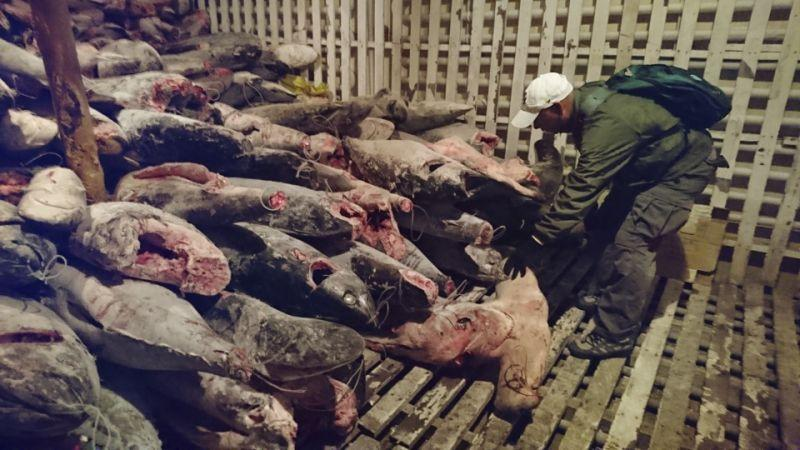 260 kapal China tangkap ikan di dekat Galapagos; Ekuador siaga