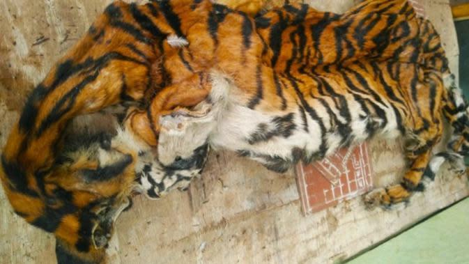 Penjual Organ Harimau Sumatra di Riau Kena Denda Rp100 Juta dan Penjara