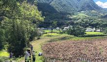 花蓮富里有機水稻田傳蟲害(2) (圖)