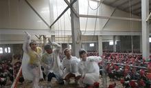 浩翔拍攝〈雞雞的攻擊〉MV 籃籃吹直笛雞群生氣暴走