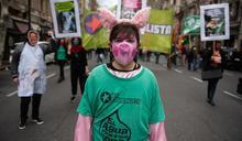 中國在阿根廷的大規模養豬計劃為何引發抗議