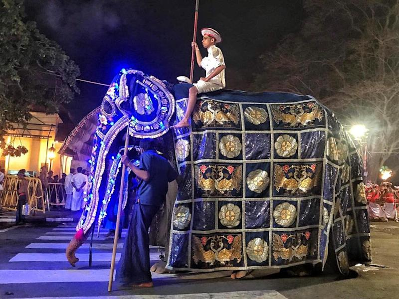Elderly skeletal elephant spared from Sri Lanka parade post social media outrage