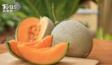 按摩加聽古典樂 熱帶馬來西亞種出日本麝香蜜瓜