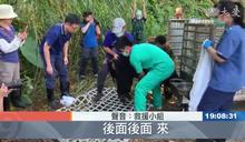 逃出陷阱後 台灣黑熊又一關