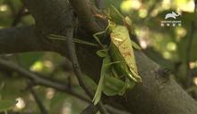 蟲蟲界這樣愛愛 神技媲美印度慾經!