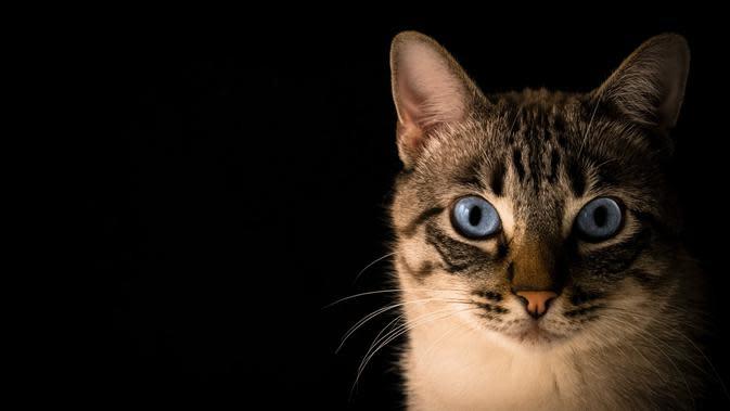 3 Ciri-Ciri Rabies pada Kucing, Kenali Gejala dan Penyebabnya