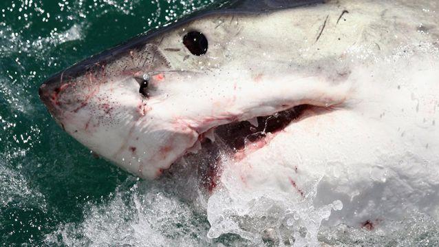 Seconds could be the difference between life and death in the event of a shark attack.