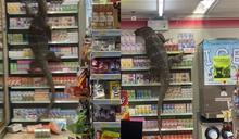 哥吉拉大戰超商 2公尺巨蜥摧殘片曝