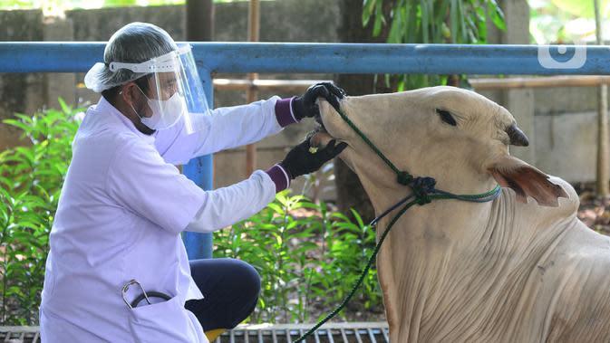 Petugas DKPKP DKI Jakarta saat melakukan simulasi pemotongan hewan kurban pada masa pandemi COVID-19 di Sekolah Al Azhar, Jakarta, Rabu (1/7/2020). Penyembelihat menggunakan anjuran protokol kesehatan agar terhindar dari COVID-19 bagi masyarakat dan para penyembelih. (merdeka.com/Imam Buhori)