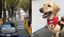 屏東唯一通過MRT認證!搜救犬Paul病逝 特搜大隊列隊致敬:任務結束了