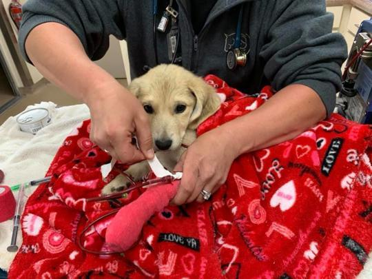 Bella survived 13 days without food or water after her owner crashed his SUV. Source: Facebook / Humane Animal Rescue and Trapping Team (HARTT).