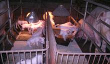不丹發生非洲豬瘟 亞洲已14國成疫區