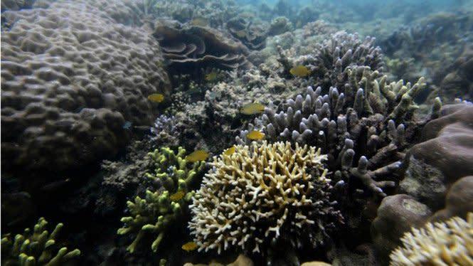 16 Wisata Bahari di Sulawesi Tengah,  Pemburu Vitamin Sea Wajib Tahu!
