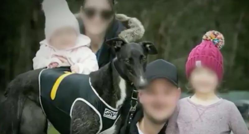 Melbourne mum saves girl, 1, from greyhound dog attack