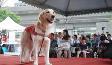 「EYE」導盲犬 美女主播為犬獻聲
