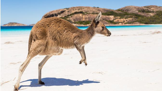 Ilustrasi Kangaroo Island (foto: shutterstock)