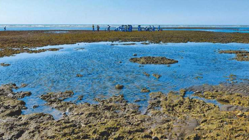天然氣接收站工程恐危害藻礁,能源跟環境你覺得要優先考量哪一個?
