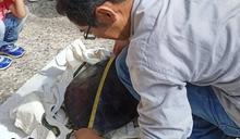 澎湖受傷綠蠵龜3年收容 望安師生祝福聲重返大海