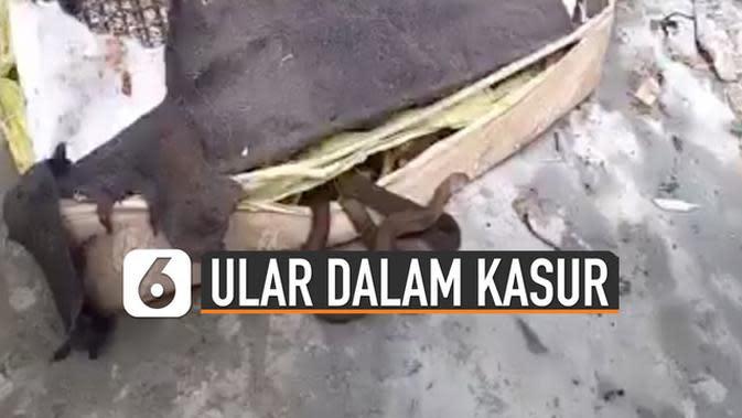 VIDEO: Ngeri, Puluhan Ular Bersarang di dalam Kasur