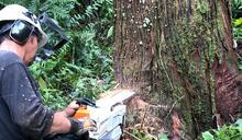 傳承林木收穫技術 嘉大建置數位教材