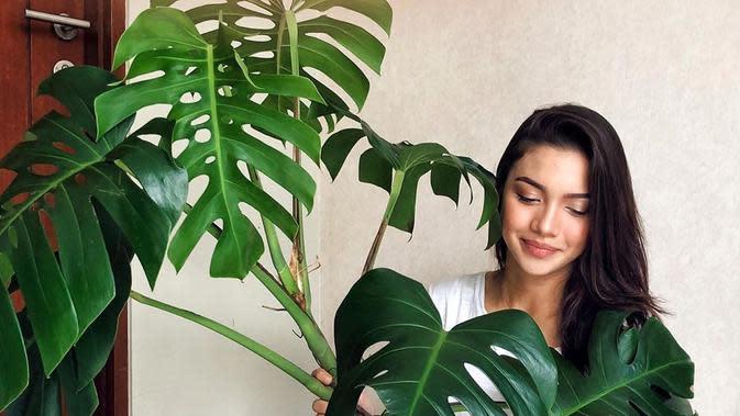 Angela Gilsha sedang memamerkan keindahan tanaman hiasnya bernama monstera (Dok.Instagram/@angelagilsha/https://www.instagram.com/p/B7xUpjRAI0G/Komarudin)