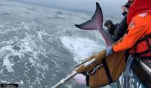 基隆產發處成功救援擱淺抹香鯨 野放重回大海