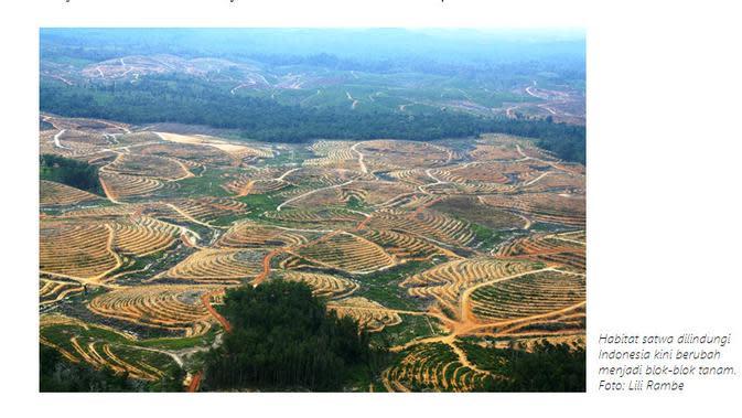 Cek Fakta Liputan6.com menelusuri klaim foto Kadrun ingin bikin gurun di Indonesia