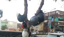 新地標?新竹「安全帽樹」畫面壯觀