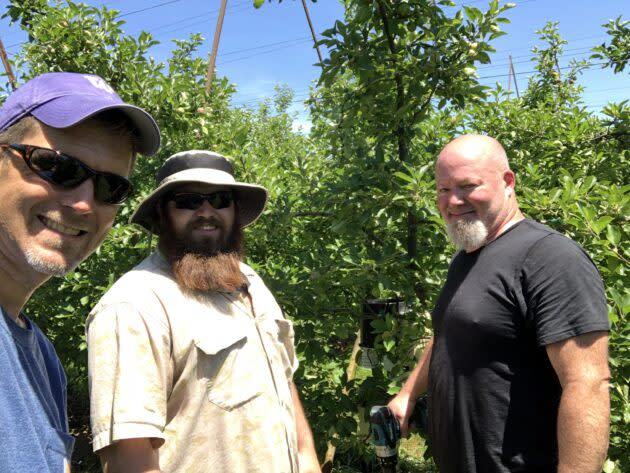 Apple orchard sensor installation