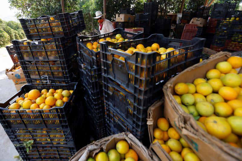 Uncertain future keeps California citrus grower awake at night
