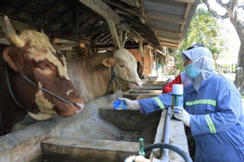 Kementan- TNI AD kerja sama program peternakan 1.000 desa sapi
