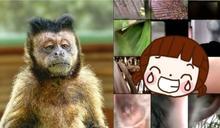 失竊手機藏「深猴嚨」短片!男上傳犯人真面目 全場嗨翻