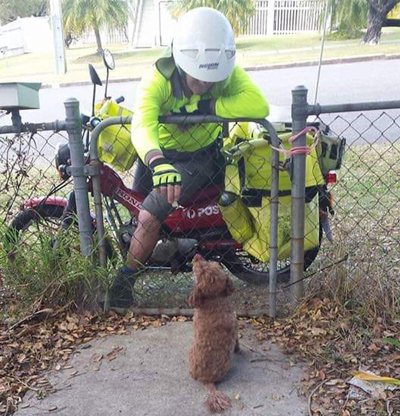 An Australia Post worker on a motorbike reaches over a fence to pat a small, fluffy dog.