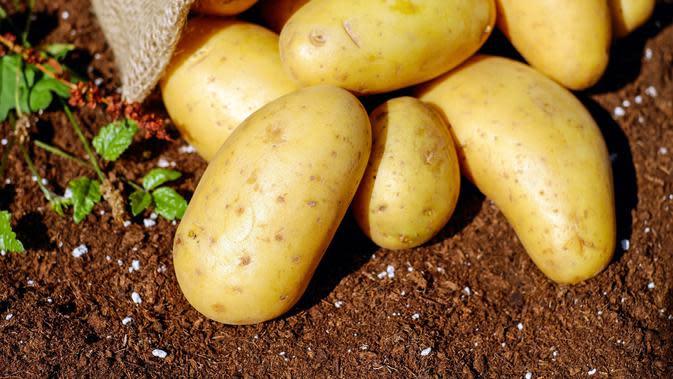 Simpan kentang bersama apel (dok. Pexels/ Pixabay)