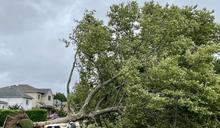熱帶風暴來襲 樹倒壓車1死…大停電 影響僅次珊迪