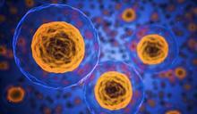 【名家論壇】蕭乃彰 / 再生醫學之自體免疫疾病的細胞療法:「間質幹細胞」有助調節紅斑性狼瘡及類風濕性關節炎之發炎反應