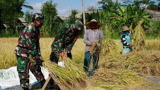 Prajurit Kodim 1626/Bangli membantu panen raya padi milik warga (Liputan6.com/Dewi Divianta)