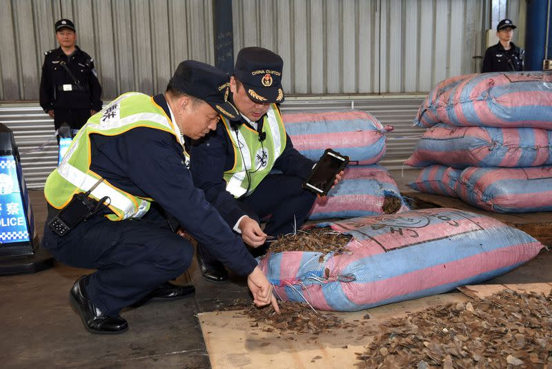 FILE PHOTO: Chinese customs officials inspect scales of pangolins they seized on a ship in Shenzhen
