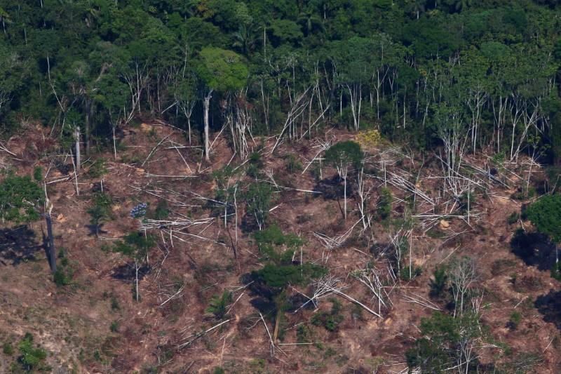 A deforested and burnt plot is seen in Jamanxim National Forest in the Amazon, near Novo Progresso