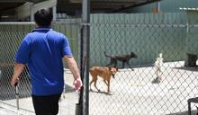 十二夜之後3/公職獸醫待遇低 1人顧300犬貓恐怖失衡