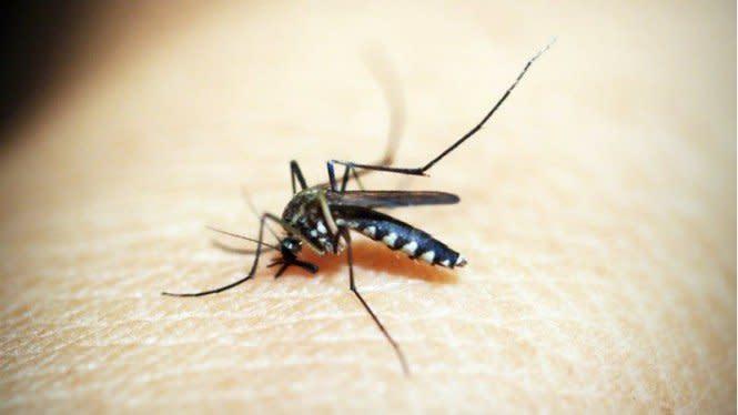 Waspada Nyamuk Penyebab DBD Menggigit Pukul 10.00-12.00