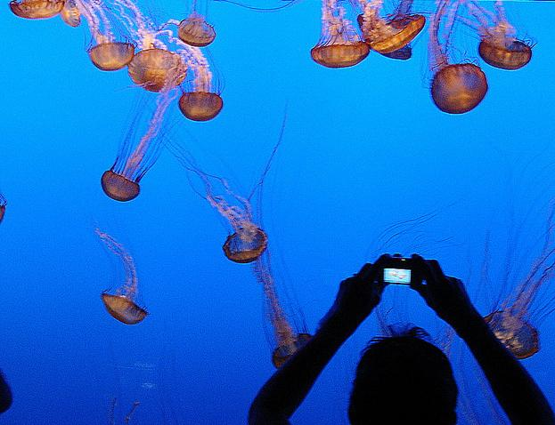 Flickr photo of the day: Saluting the jellies