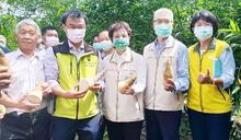 陳吉仲視察 白河綠竹筍低灌節水設施