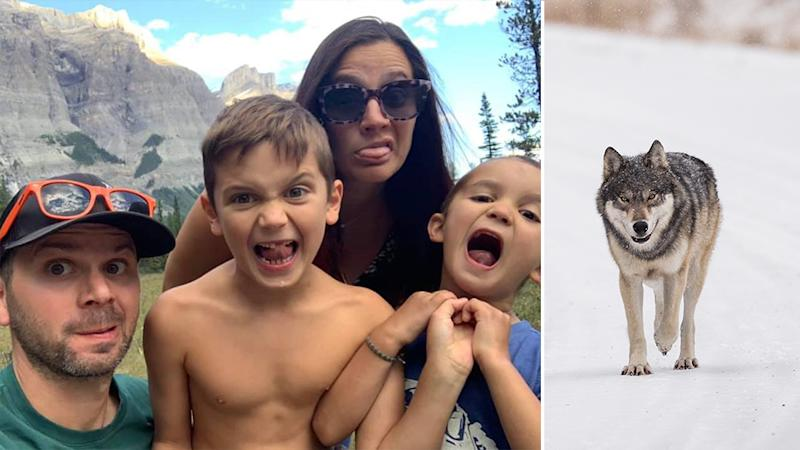 A New Jersey family (left) was saved by Russ Fee after a wolf (right is a stock image) dragged a father from his tent at Banff National Park.